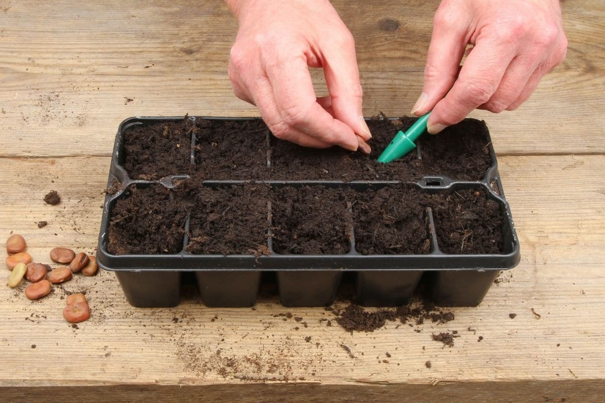 planting and starting seeds in a container placed in a table indoors