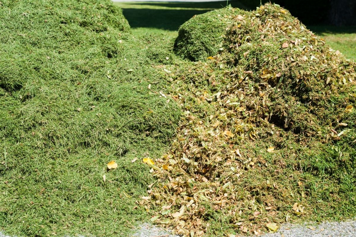 pile of mulch from grass clippings gathered in the lawn