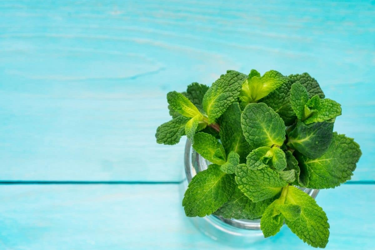 peppermint in a clear bowl placed in a blue table