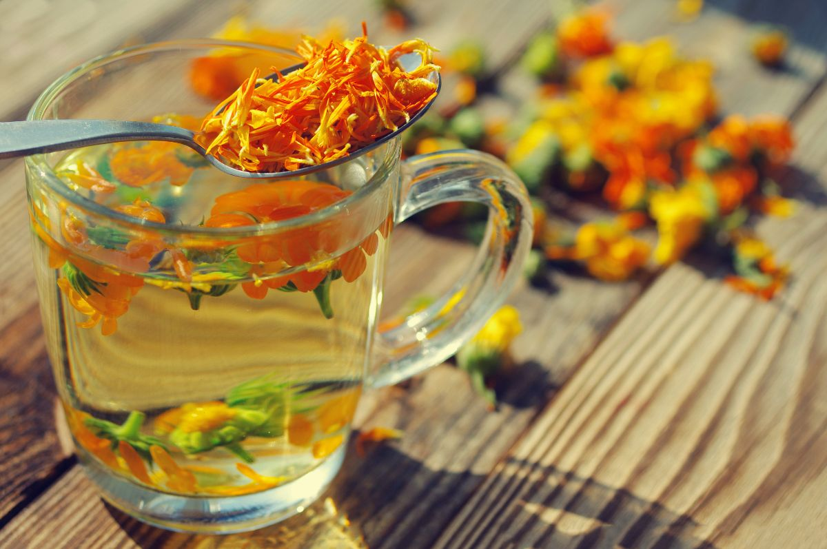 marigold flower made into a tea in the wooden table with clear glass