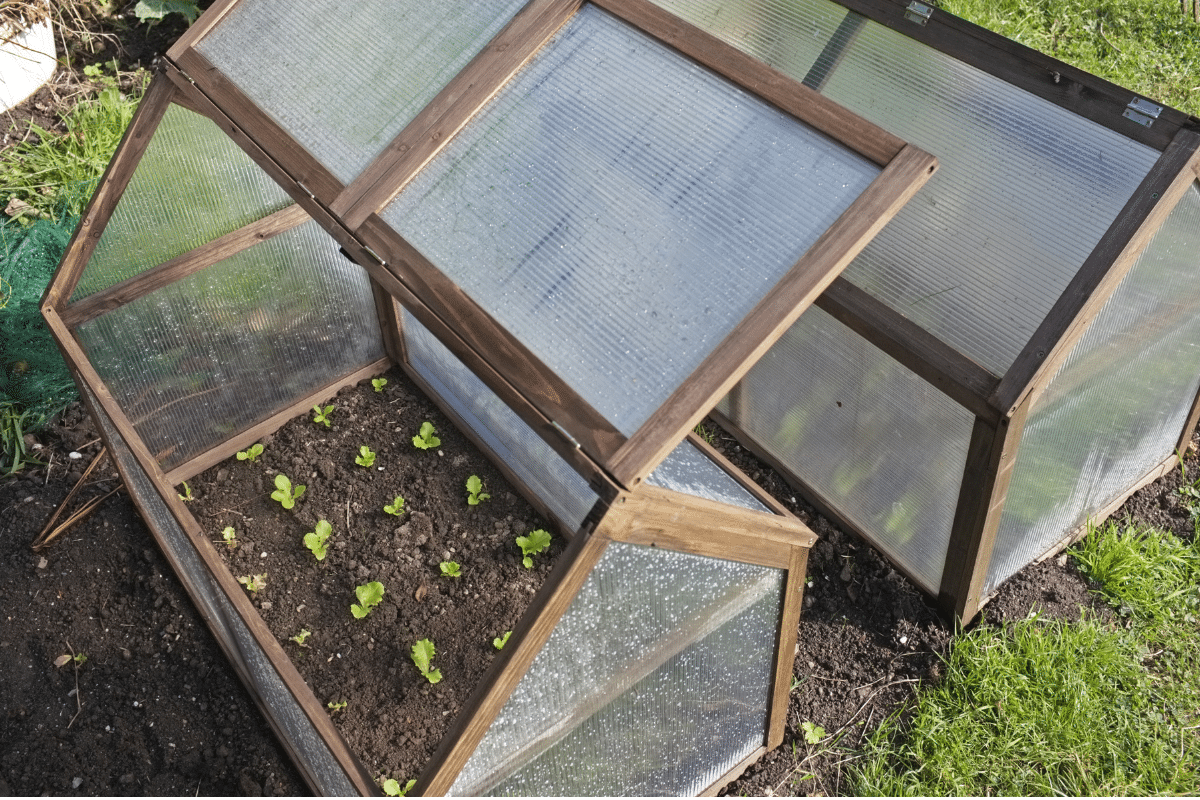DIY Greenhouse with young seedlings in the garden