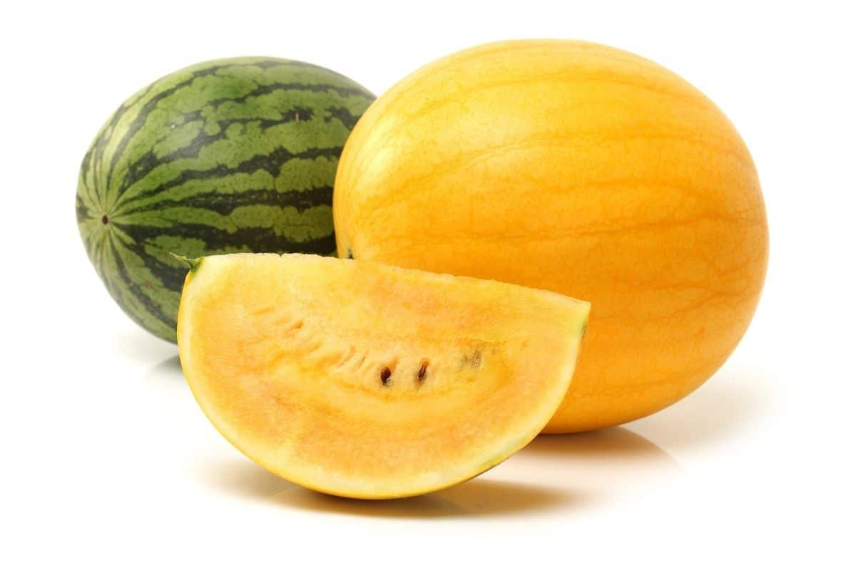 golden midget watermelon that has a unique yellow rinds with a other variety of watermelon in an isolated background