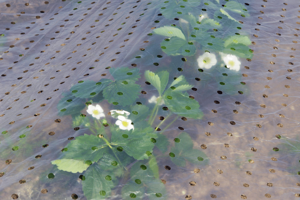 plants in the garden with greenhouse film with holes