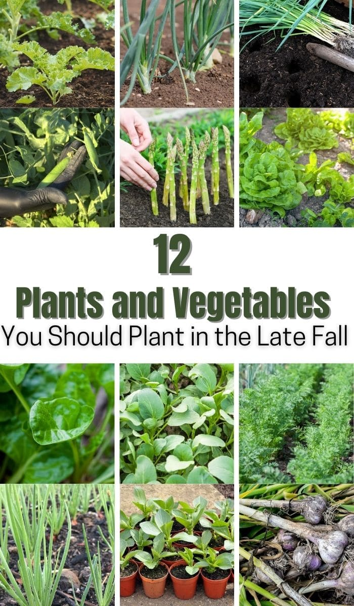 collage of vegetables to plant in the late fall