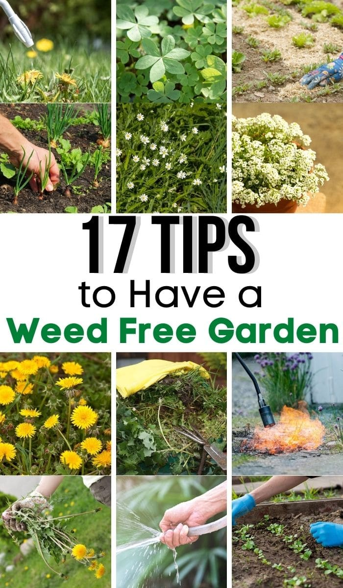 17 Tips to Have a Weed Free Garden