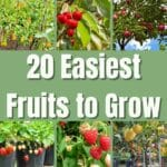 Easiest Fruits to Grow