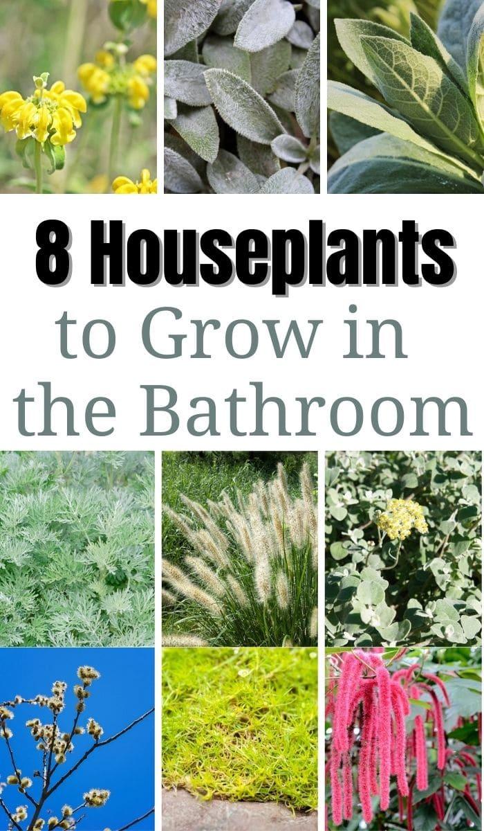 8 Houseplants to Grow in the Bathroom