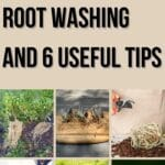 What is Root Washing and 6 Useful Tips