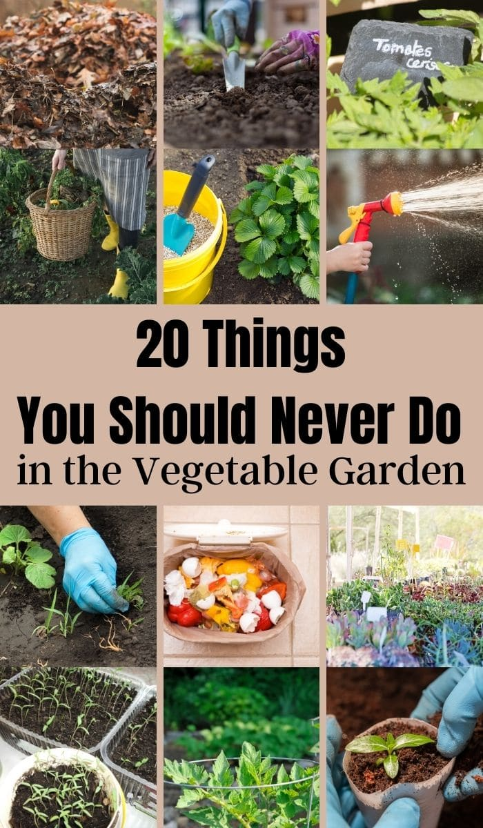 Things You Should Never Do in the Vegetable Garden