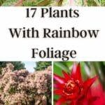 Plants With Rainbow Foliage