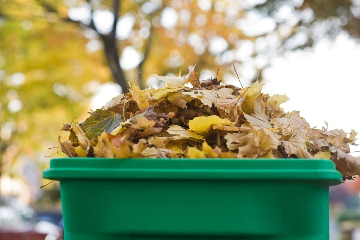 compost file from dried leaves during autumn in a compost bin