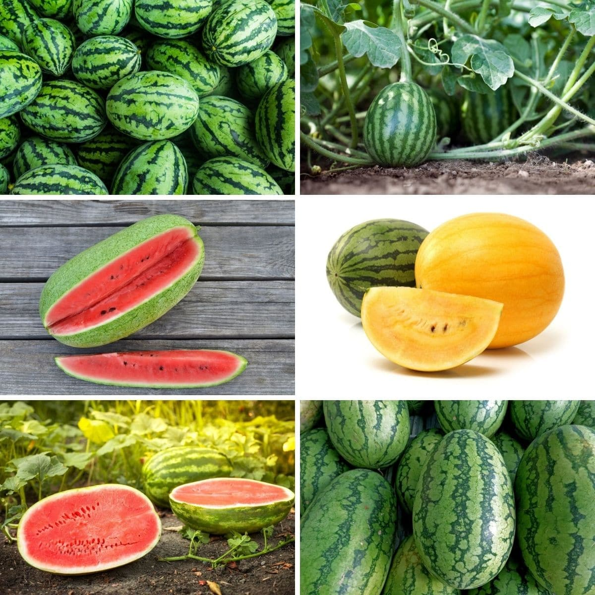 10 Best Kinds of Watermelon to Grow