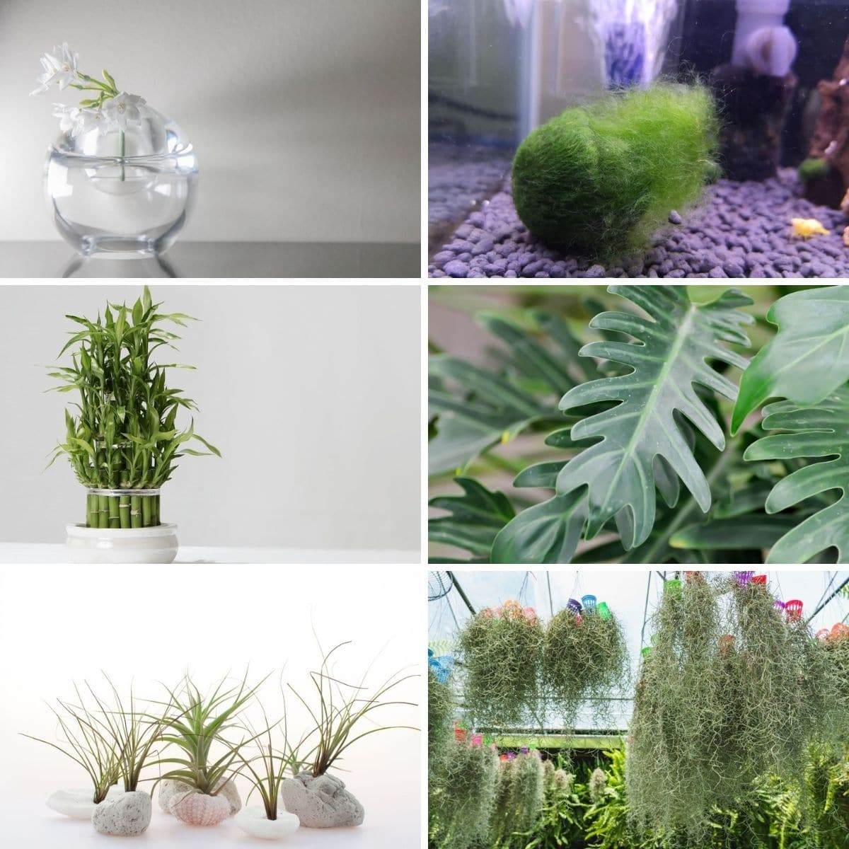 Collage photo featuring plants without soil