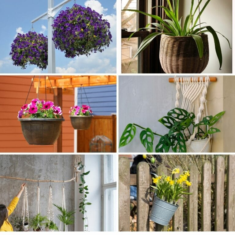Clever Ways to Hang Your Plants