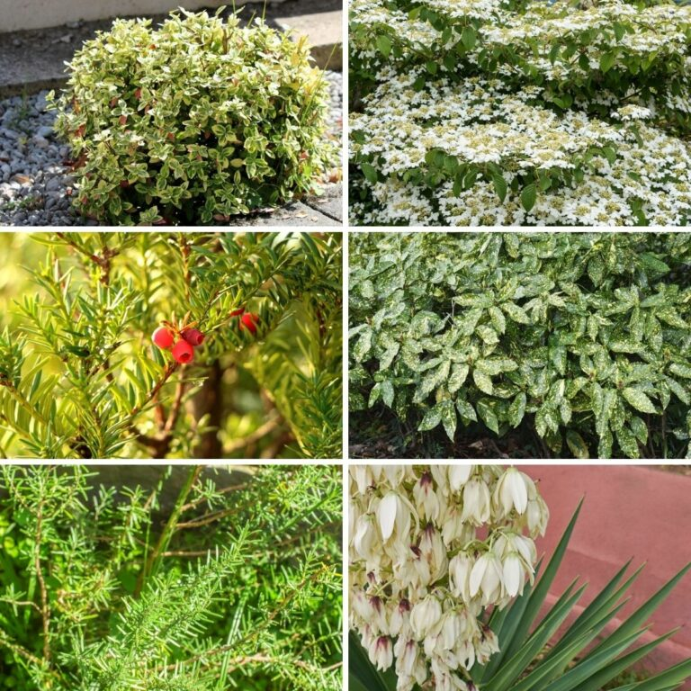 collage photo of evergreen shrubs and trees