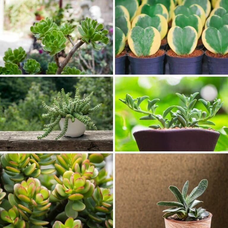 32 Most Popular Succulents to Grow