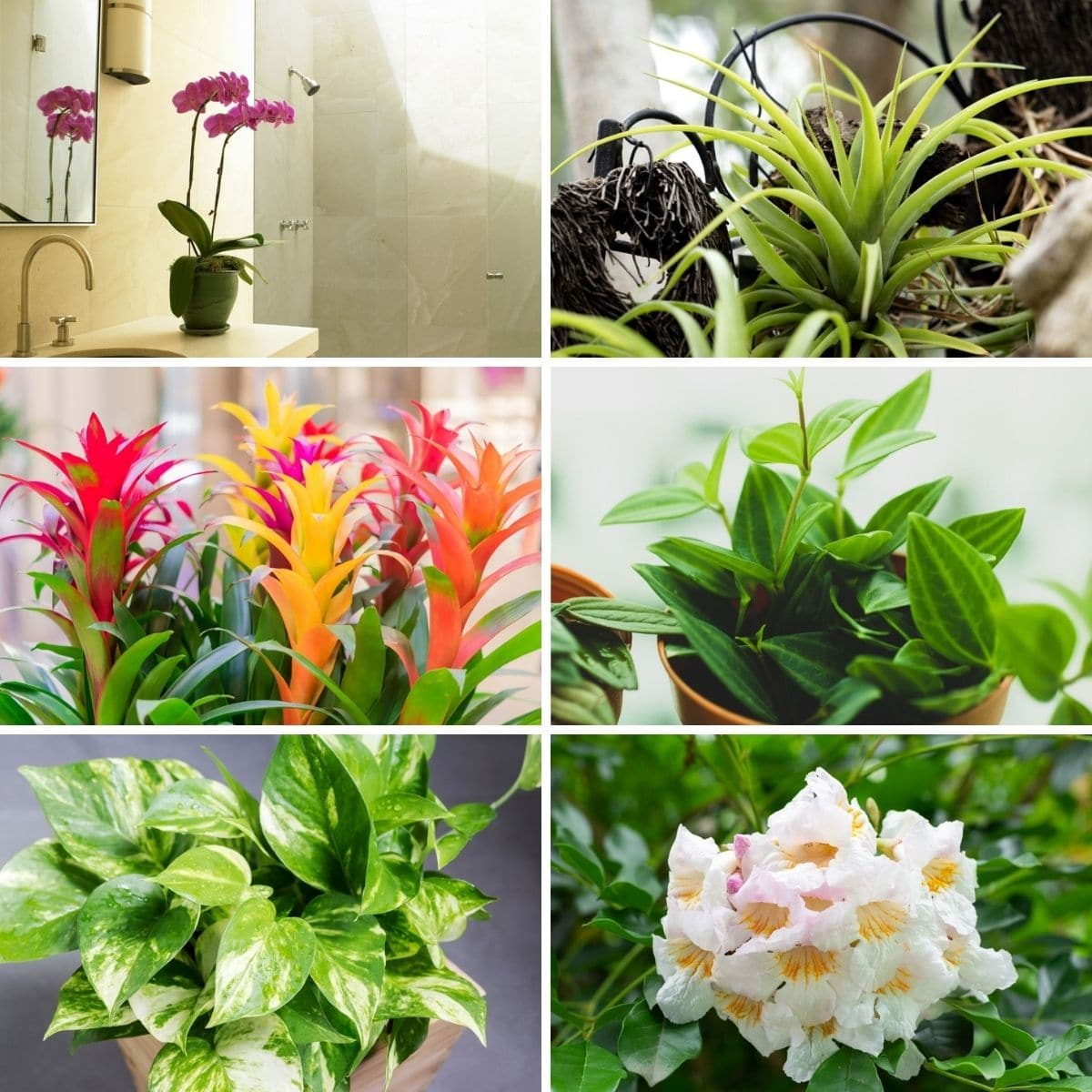 Bathroom friendly houseplants in a collage.