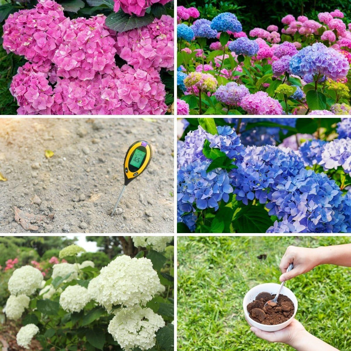 Hydrangea gardening collage.