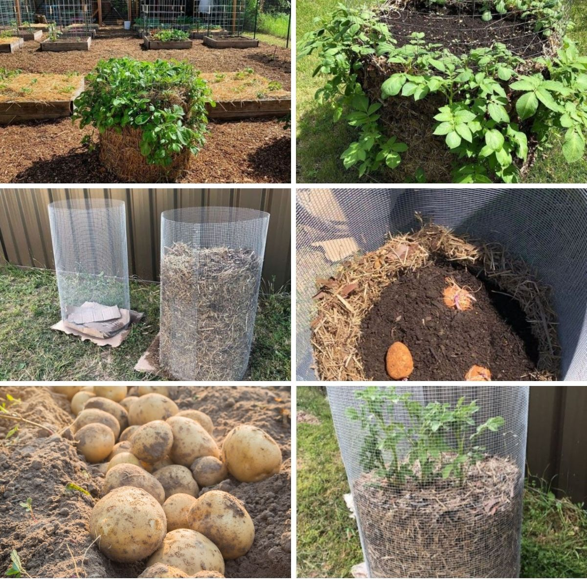 Potato tower planting examples in a collage.