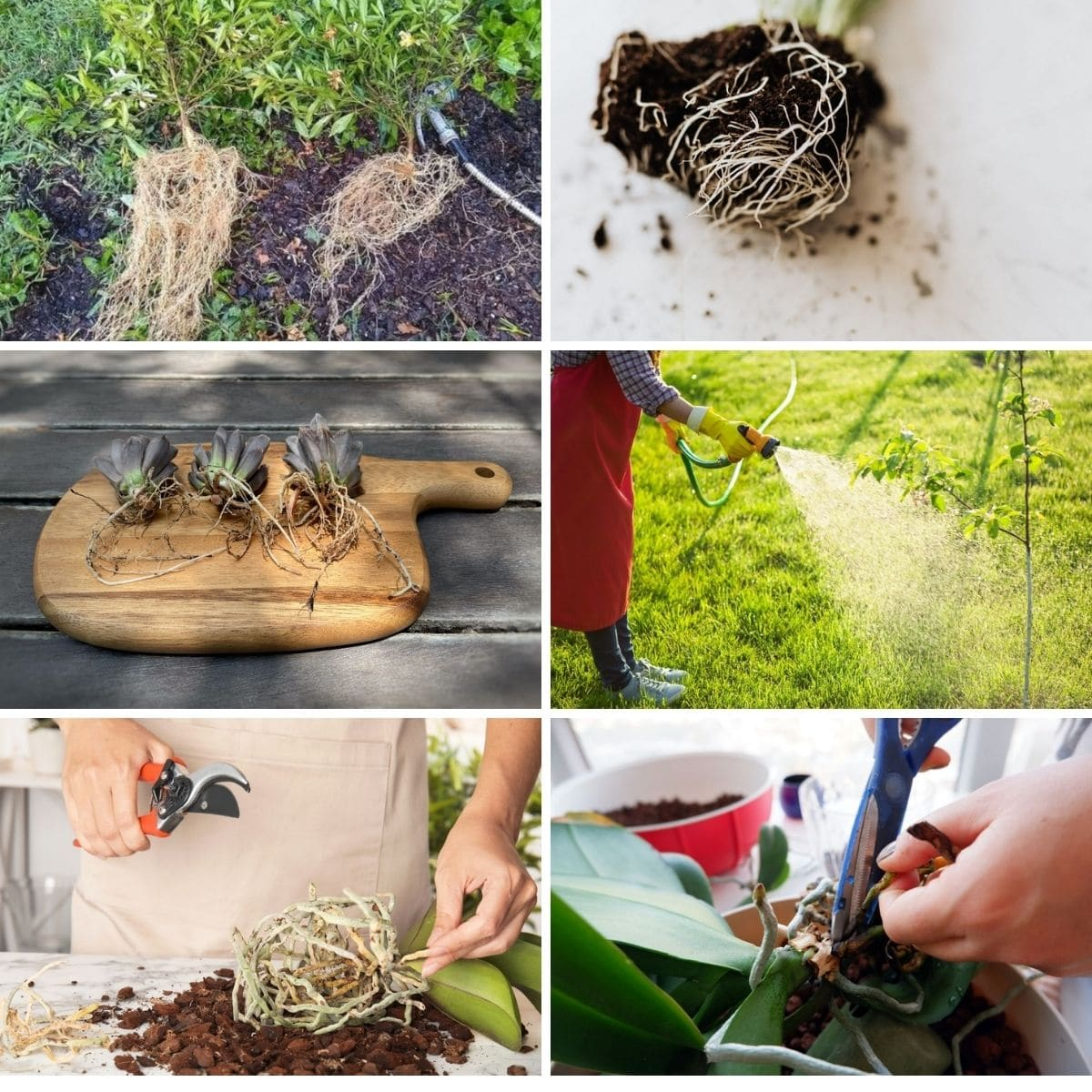 Examples of root washing.