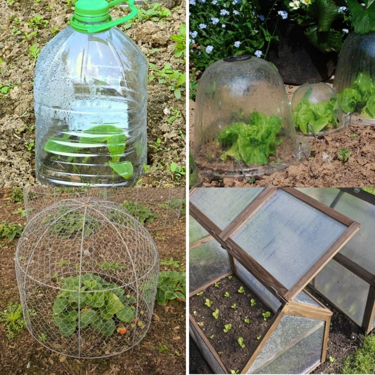 20 Unique Garden Cloche Ideas