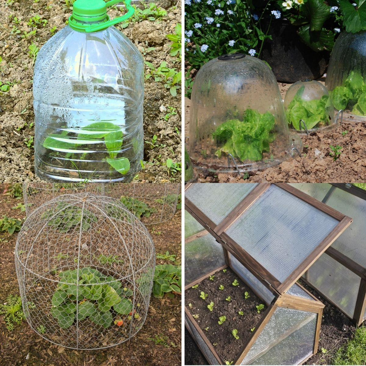 Garden cloches featured from the content.