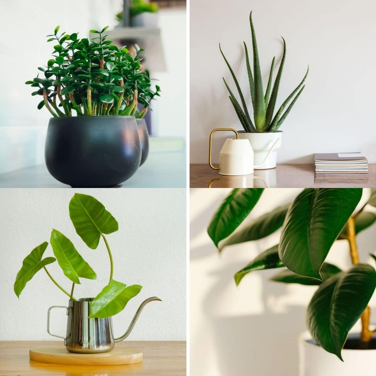 Collage photo featuring 4 plants from the content.