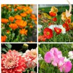 Flowers to Plant Directly in the Vegetable Garden