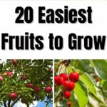 20 Easiest Fruits to Grow