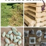 20 Tips for Gardening When You Are Broke