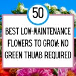 Best Low-Maintenance Flowers to Grow: No Green Thumb Required