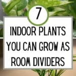 Indoor Plants You Can Grow As Room Dividers