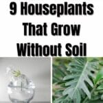 9 Houseplants That Grow Without Soil