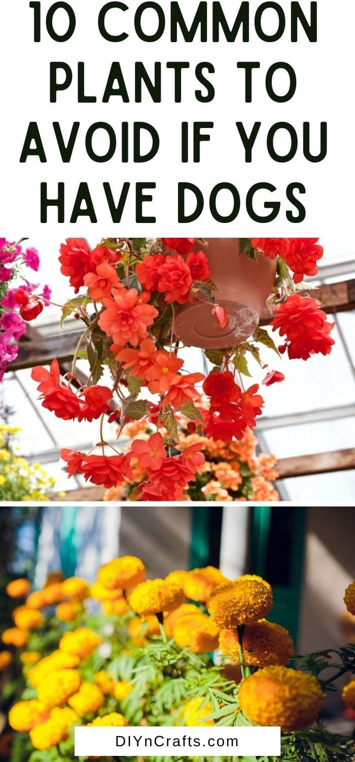 10 Common Plants to Avoid if You Have Dogs