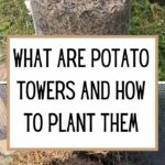 What are Potato Towers and How to Plant Them