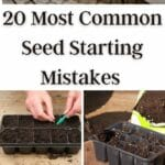 Most Common Seed Starting Mistakes