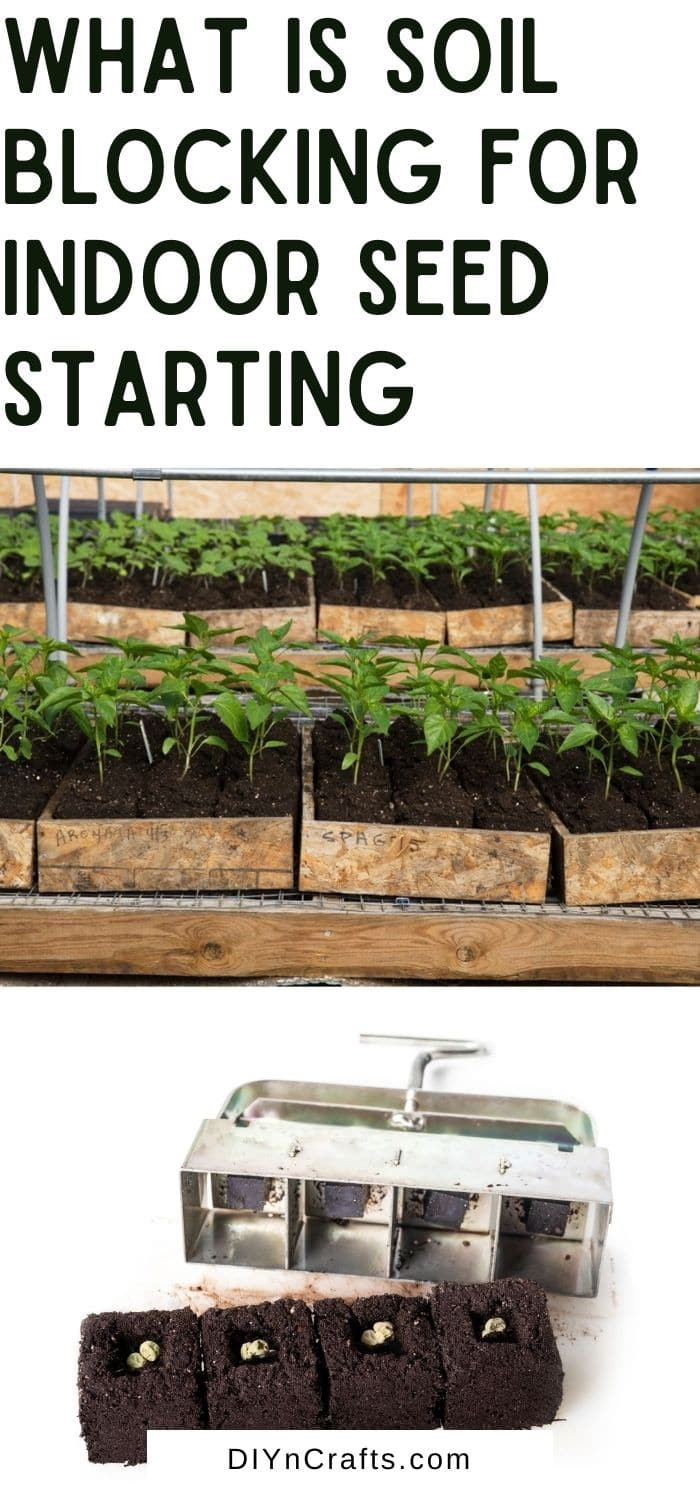 What is Soil Blocking for Indoor Seed Starting