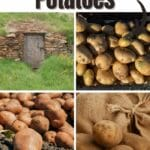 6 Helpful Tips for Storing Potatoes