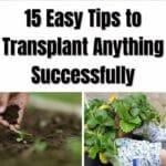 15 Transplanting Tips