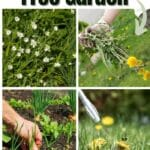 Tips to Have a Weed Free Garden