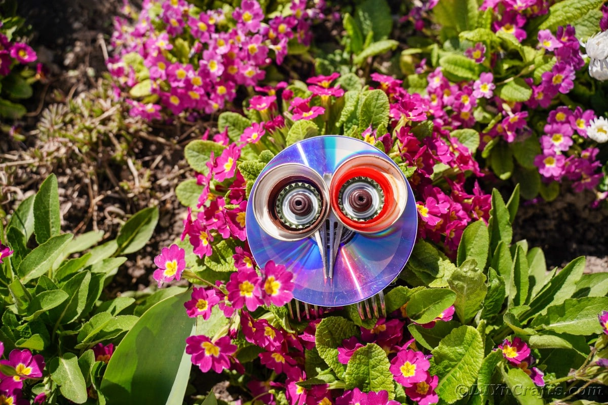 CD owl on green shrub with pink flowers