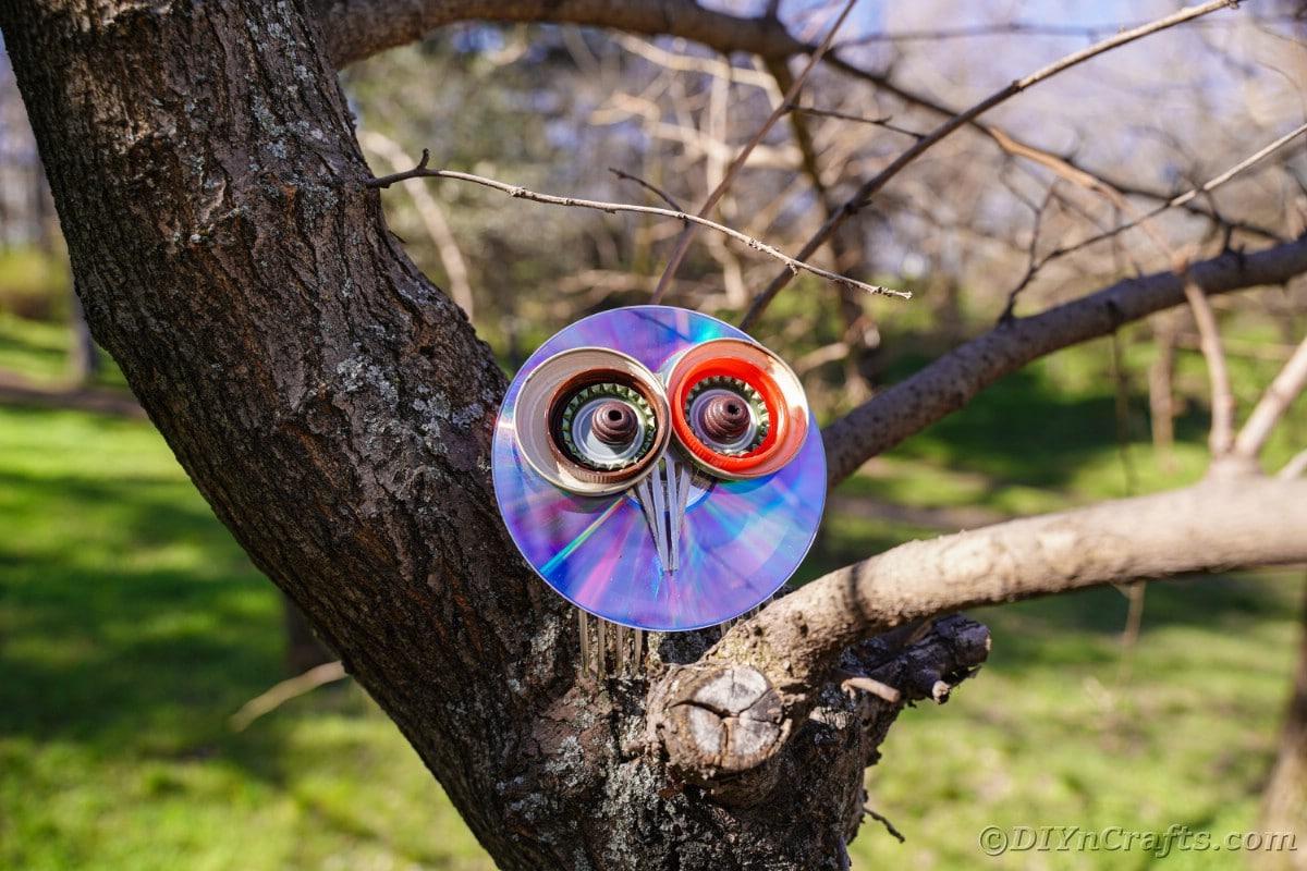 CD owl sitting in tree