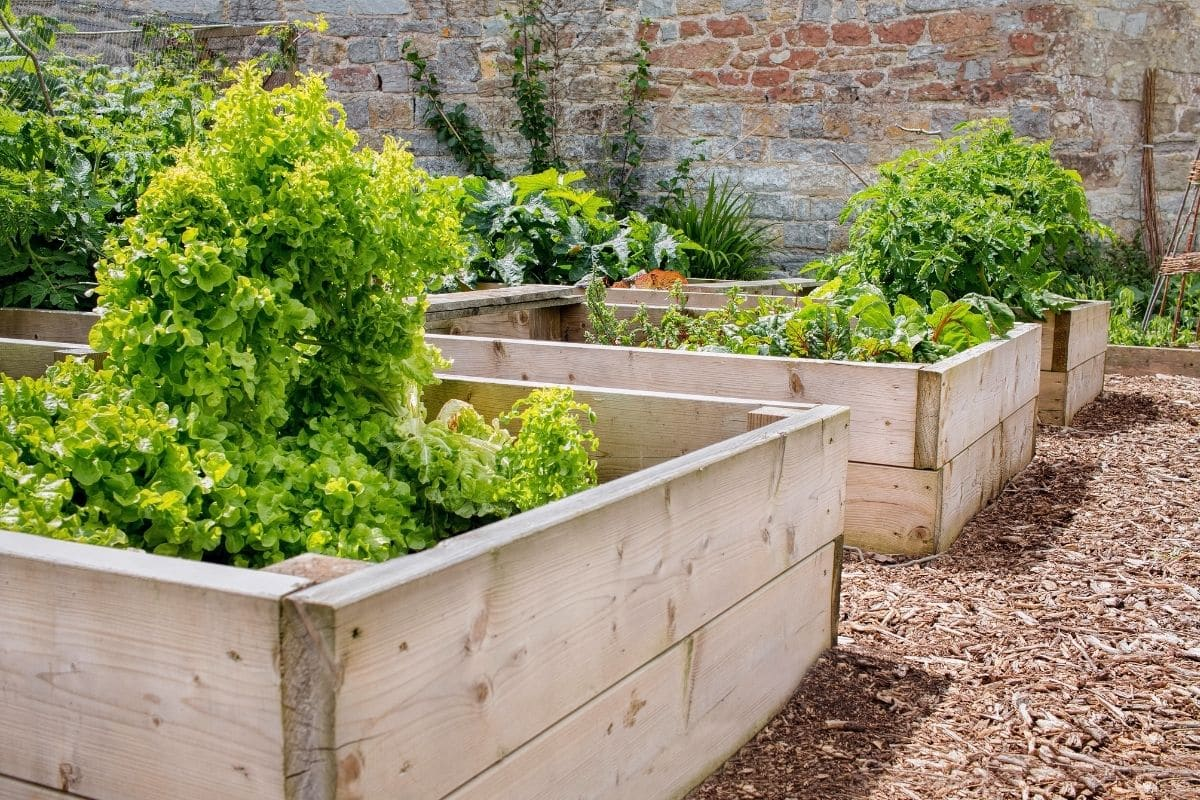 plants growing in a wooden raised bed