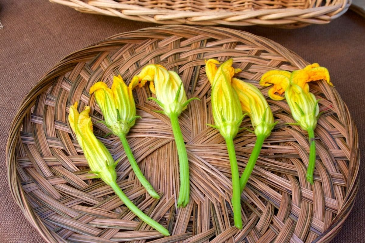 harvested Squash Blossoms in a rattan tray