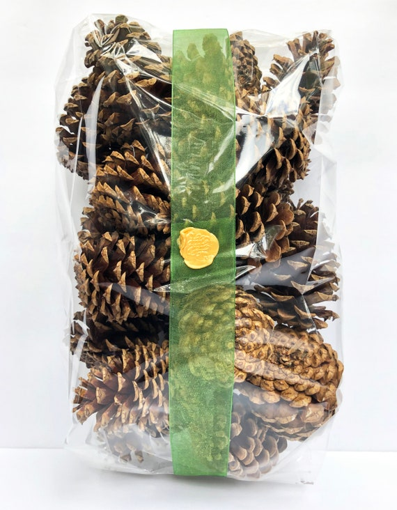 Pine Cones Unscented Pine Cones 10 Pinecones per bag | Etsy