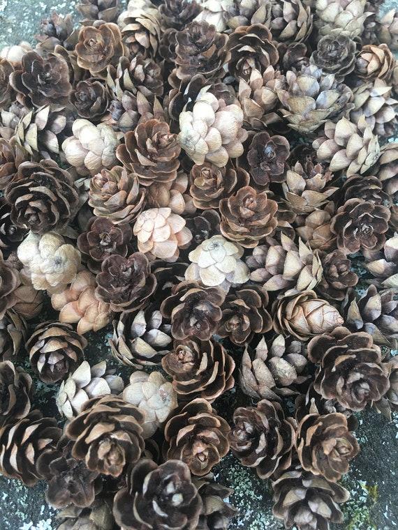 300 pieces MINI Wedding Decor, Natural Pine Cones, Eastern Hemlock Small Pine Cones, Mini pinecones, Primitive Craft, Rustic Decor