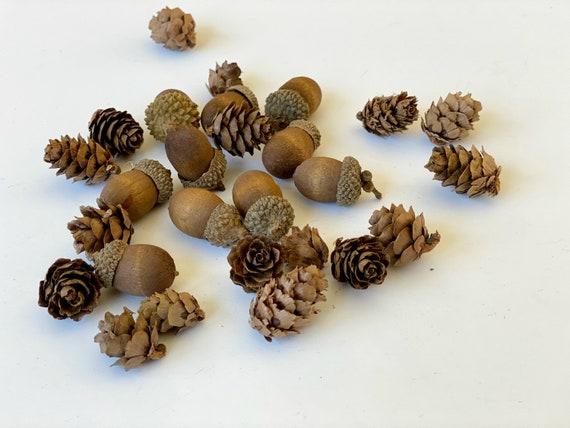Miniature Pine Cones Acorns-Terrarium Accessory Natural   Etsy