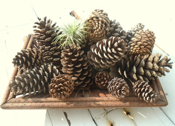 15 Assorted Large and Medium Natural Pine Cones for Crafting Art Projects and Pinecone Decor